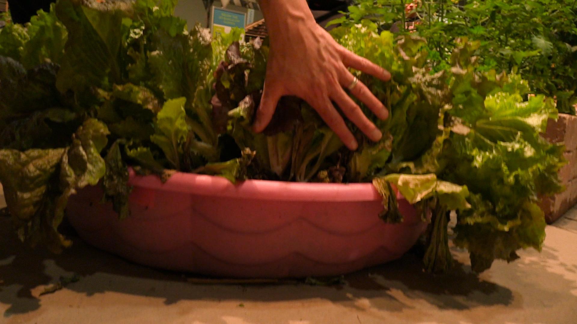 Create a perfect home garden